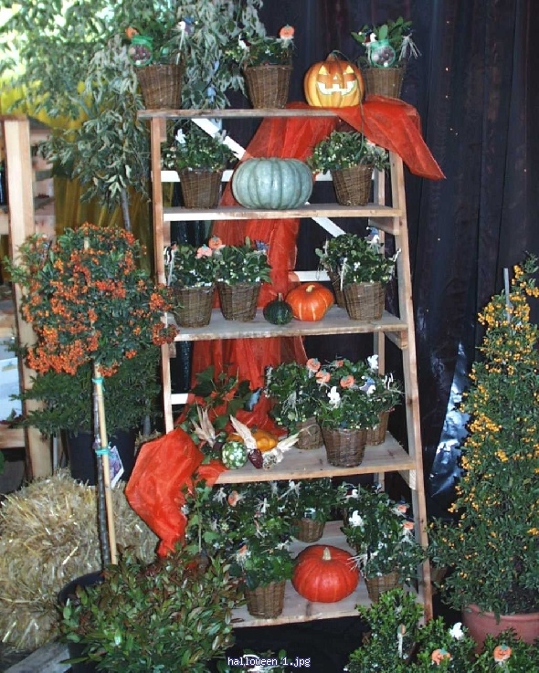 http://gardenpic.landgard.de/cache/vs_trade__fairs__and__concepts_olba__2001_halloween%201-jpg.jpg